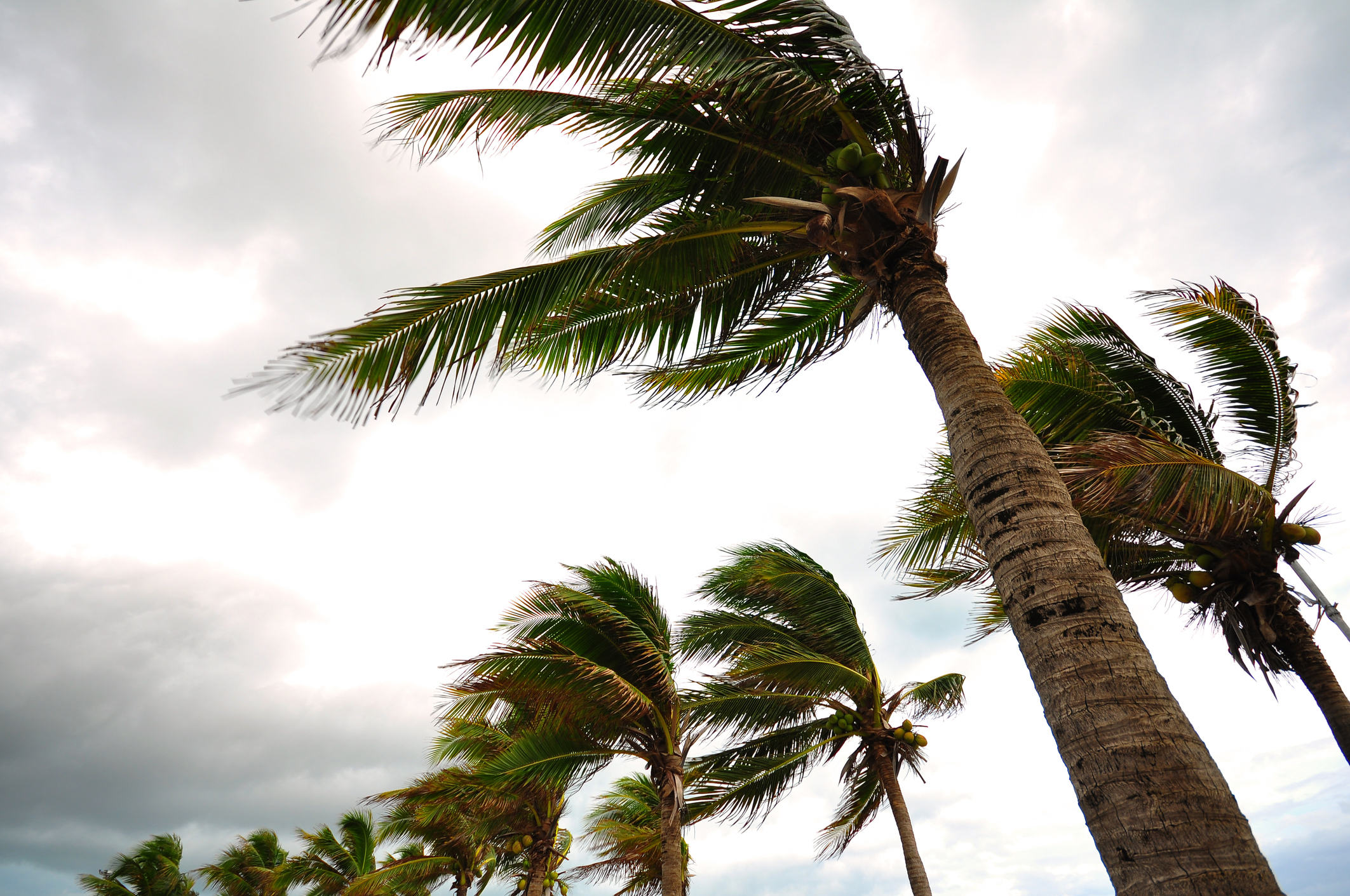 Wind/Storm Damage Tips: Loss & Prevention